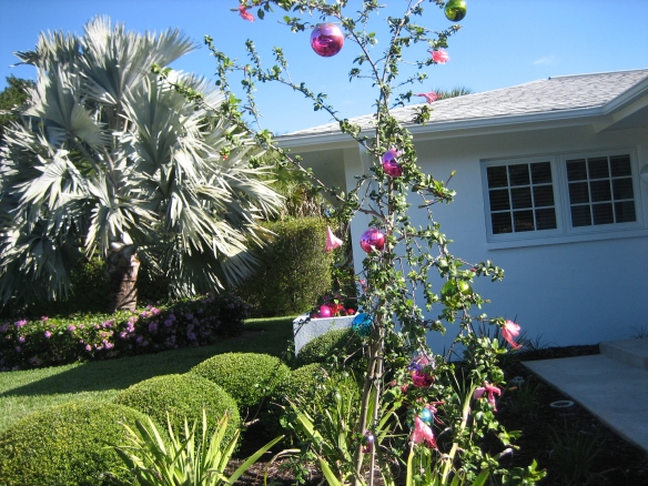 SanibelSusan's Charlie Brown tree at home