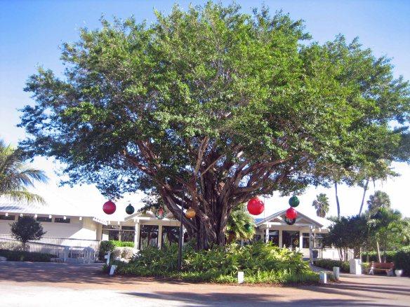 Near South Seas Resort entrance on Captiva