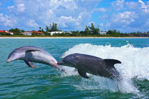 Temps On Captiva Island Florida In January
