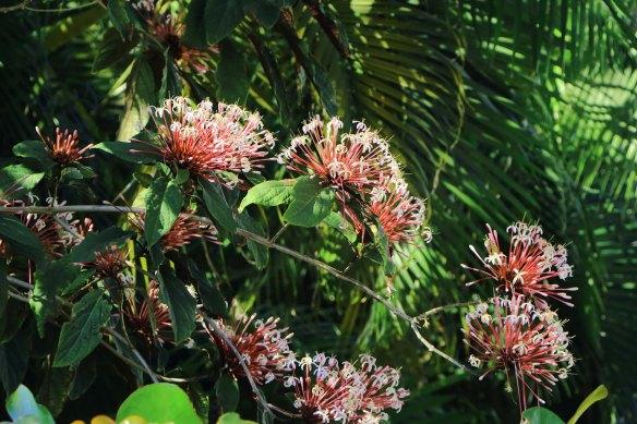 Flowering shrub - i forget name
