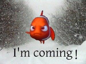 Nemo I'm coming