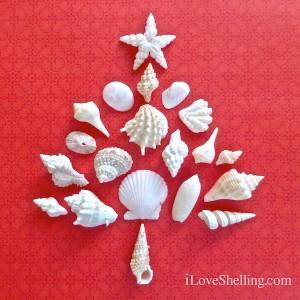 seashell-christmas-tree-on-red-300x300