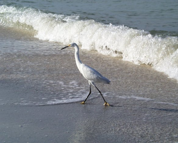 HeronSurf