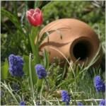 still_life_object_garden_236902