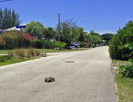 Be sure to watch out for turtles crossing in Lake Murex.