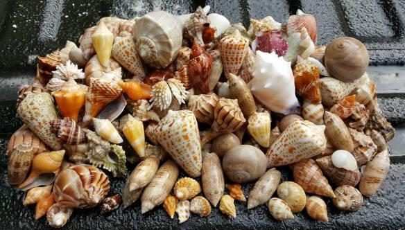 shells 01-22-16