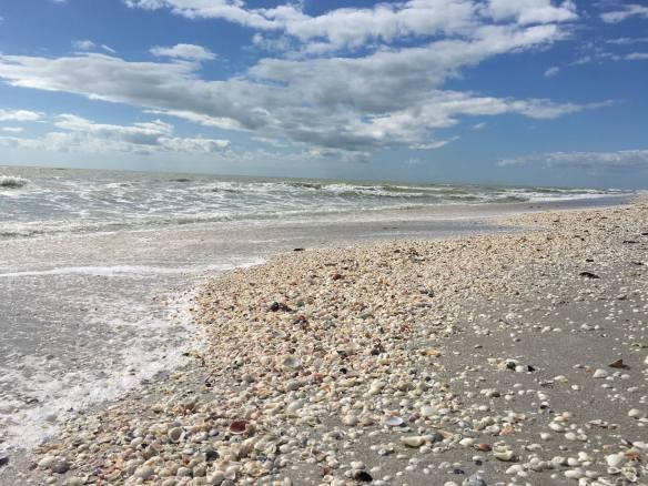 Beach 02-08-16.jpg