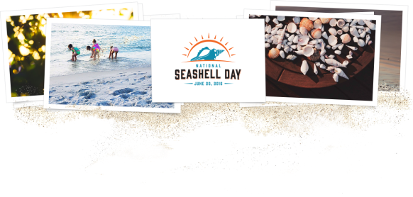National Seashell Day 2016