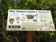 Savannah Oysters