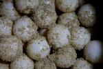 sea-turtle-eggs