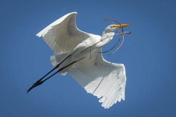egret 4