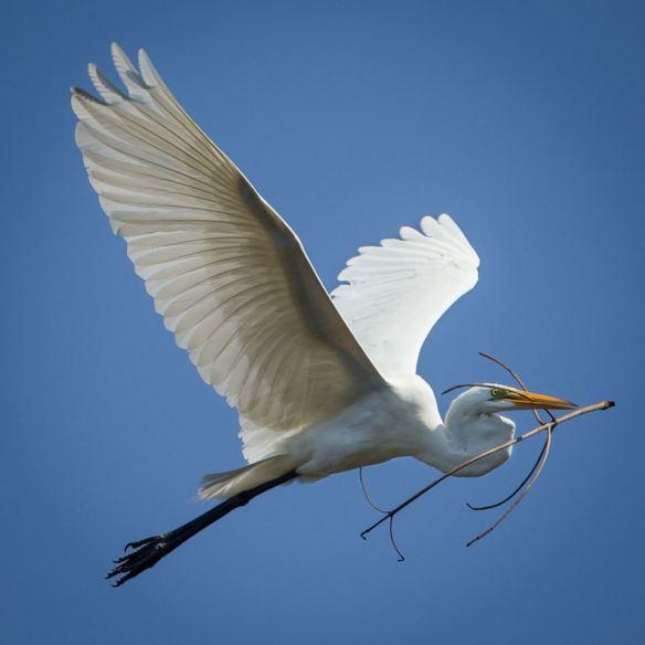 egret 5