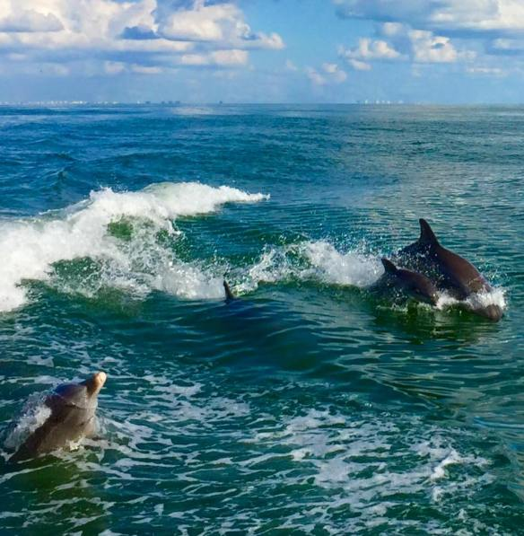 dolphins-with-baby