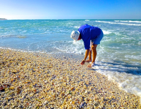 sanibel-island-shelling.jpg