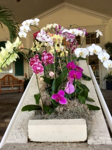 Sanctuary orchids