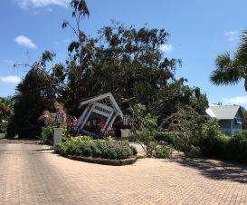 2017-09-12 CasaYbel tree