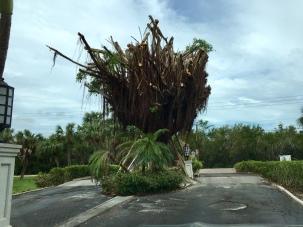 2017-09-29 Casa Ybel Tree