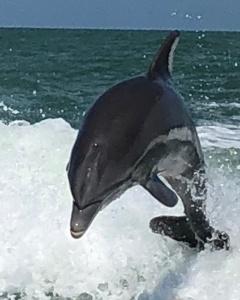 dolphin 2018-05-0`