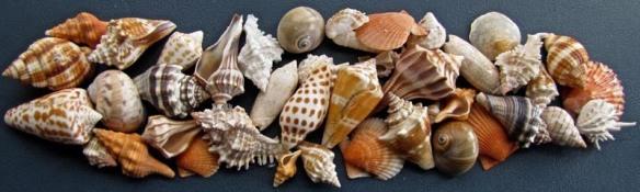 Shell club shells