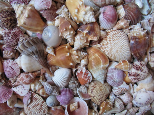 shells a bunch