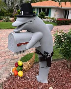 Pilgraim dolphin 2018