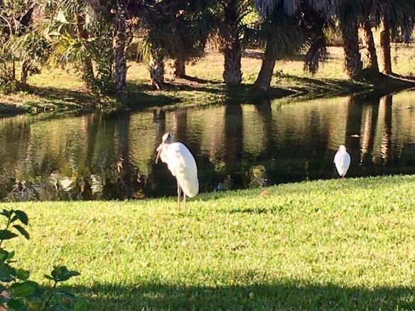 Chateau birds.jpg